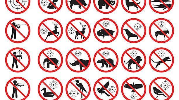 В Молдове запретят охоту на зайцев, фазанов и других птиц и животных