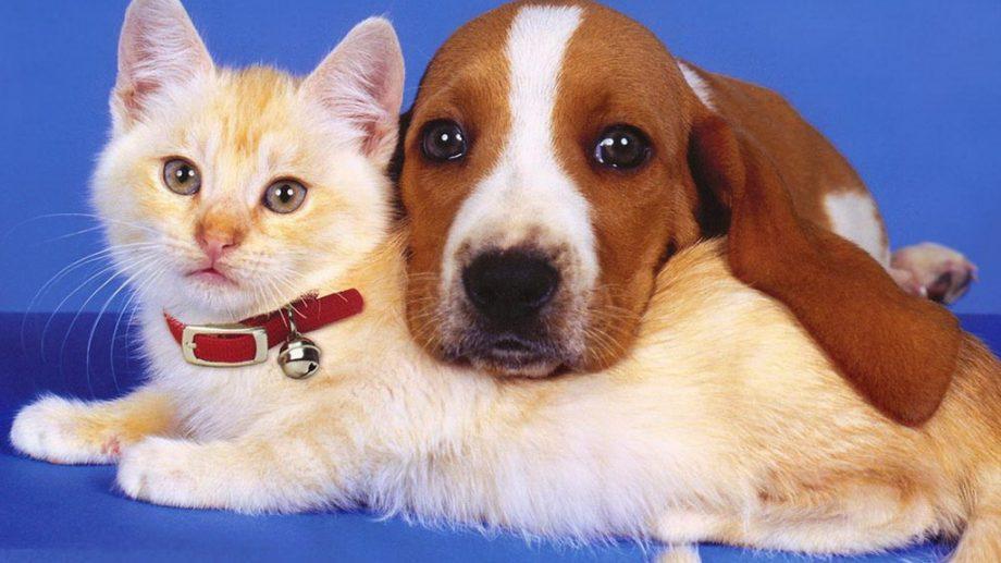 Правила содержания и выгула домашних животных могут ужесточить