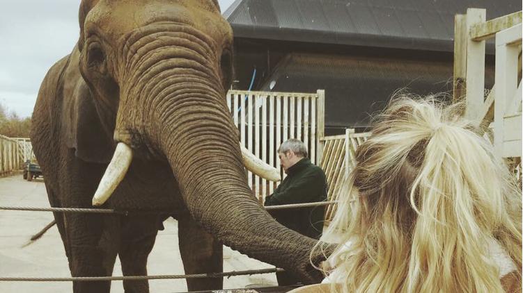 (фото) Сегодня отмечается Всемирный День Слонов. А вы любите слонов так, как их любим мы?