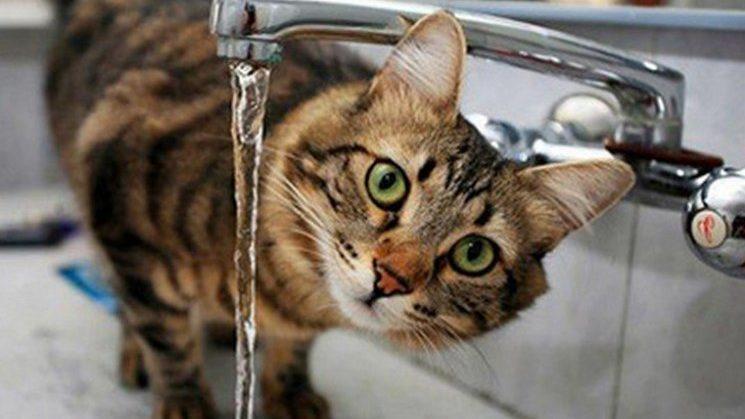Узнайте, где будет отключена вода во вторник, 12 августа