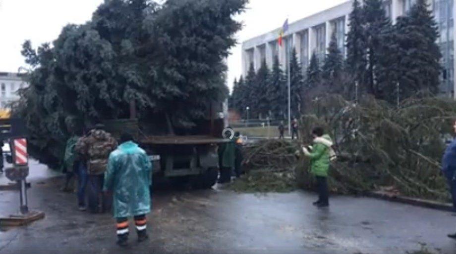 (видео) На ПМАН уже установили новую пышную Рождественскую елку