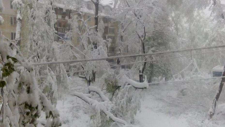 (фото) Снегопад в апреле: Вспоминаем, как стихия накрыла Молдову 20 и 21 апреля 2017 года