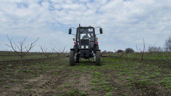 Студент из Штефан-Водэ открыл бизнес в сельском хозяйстве при поддержке ЕС