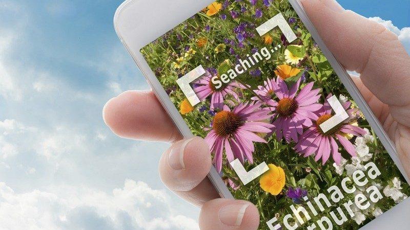 (фото) Seek – Shazam для растений. Приложение, которое поможет распознать любое растение