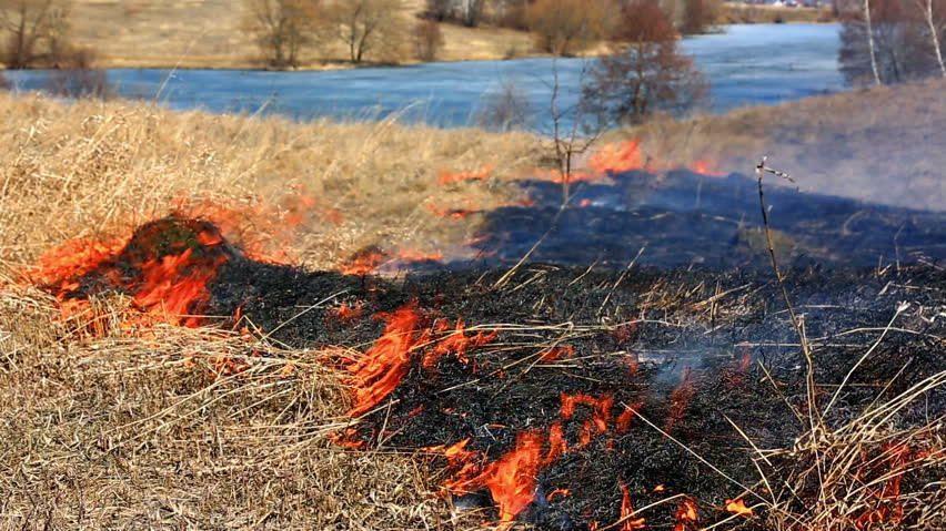 Метеорологи объявили до конца месяца желтый код пожароопасности