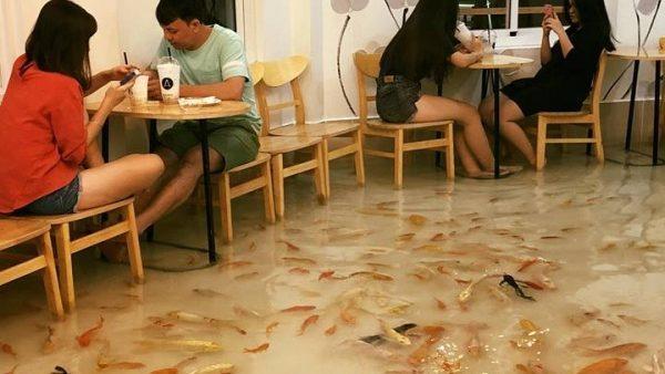 (фото, видео) Необычное кафе где по полу плывут рыбы. Где находится это заведение