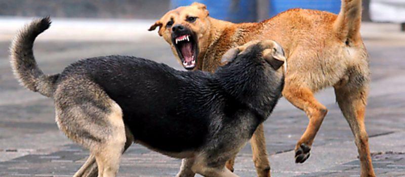 Премьер потребовал ужесточить штрафы для владельцев собак, которые не следят за своими питомцами