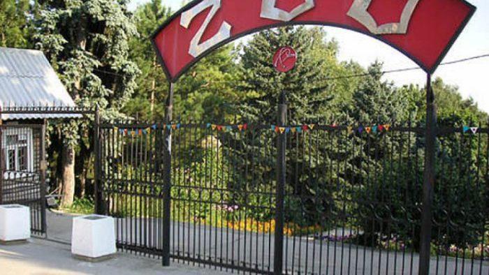 1 июня вход в зоопарк для детей будет бесплатным. Коллекция зоопарка насчитывает более 1600 видов животных