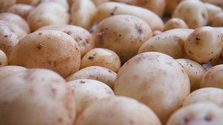 Из-за сокращение посевных площадей картофеля в 2 раза, в Молдове образовалась дефицит картошки