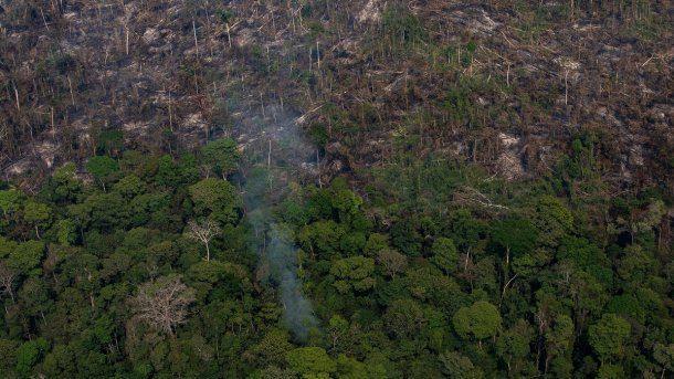 """Леонардо ДиКаприо пожертвует $5 млн на спасение лесов Амазонии отпожаров, а от денег """"Большой семерки"""" Бразилия отказалась"""