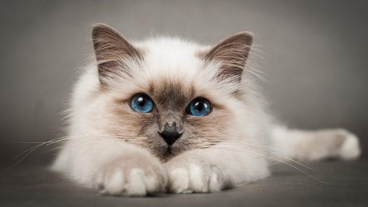 Всемирный день кошек: как понять своего питомца с полумяу