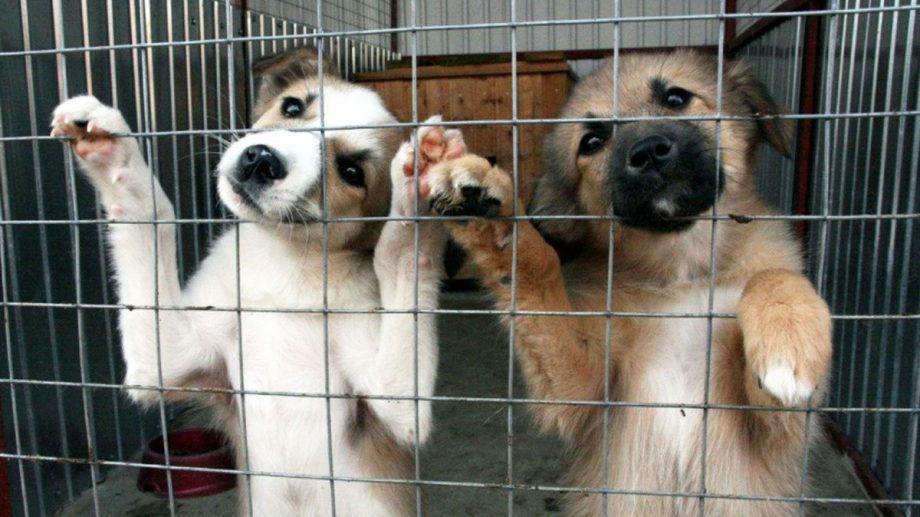Бездомные животные в Приднестровье. Все начинается с человечности!