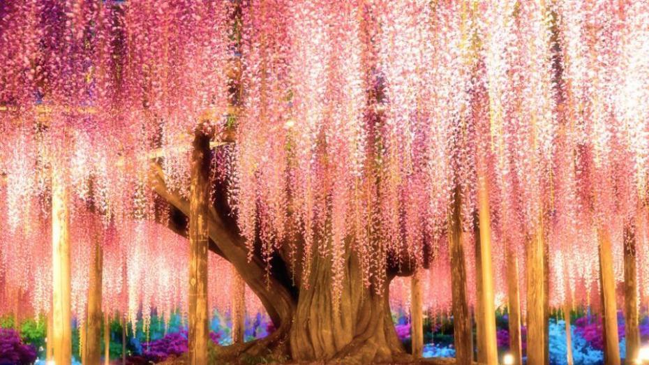(фото) «Удивительно, что мы видим деревья и больше не удивляемся им». Самые красивые деревья мира