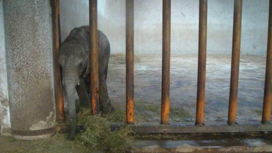«Воды слонам!». Африканских слонят запретили продавать в цирки и зоопарки