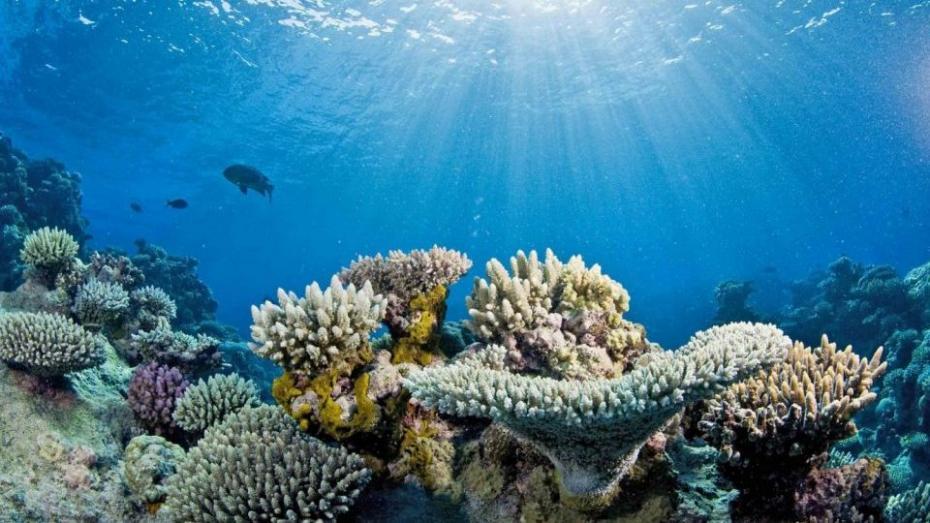 60 % мирового океана люди уже испортили