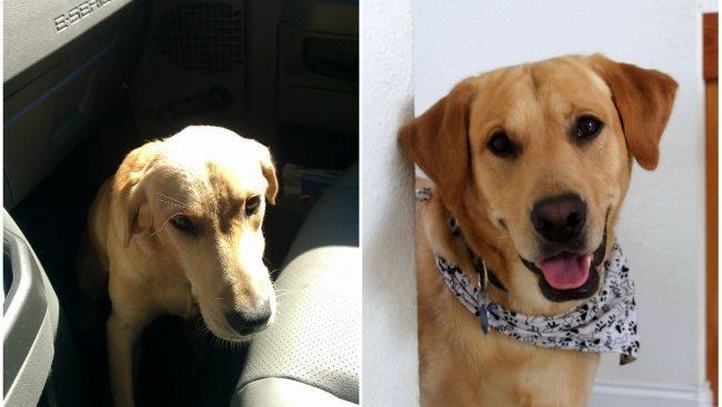 10 фотографий животных до и после того, как их забрали из приюта