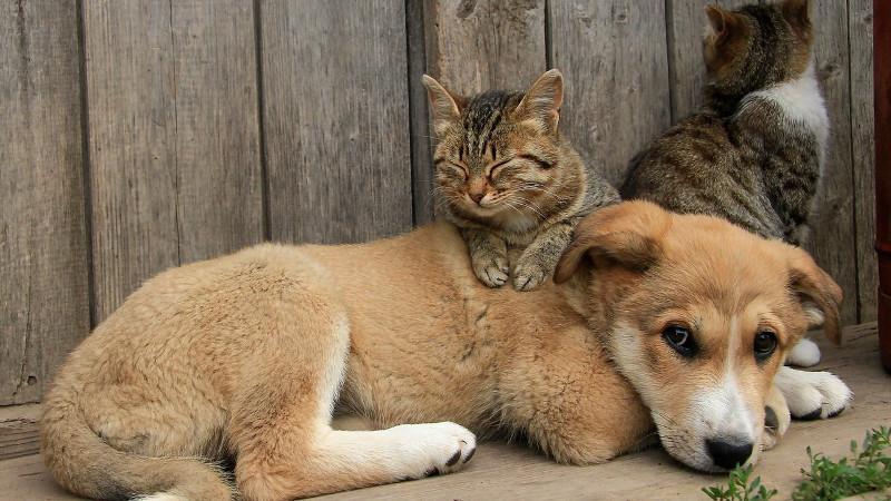 В Кишиневе будет создана Служба по защите животных. Что будет входить в ее обязанности