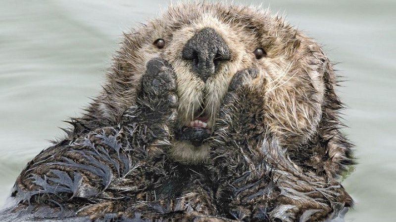 Работы финалистов всемирного конкурса смешных фотографий диких животных 2019