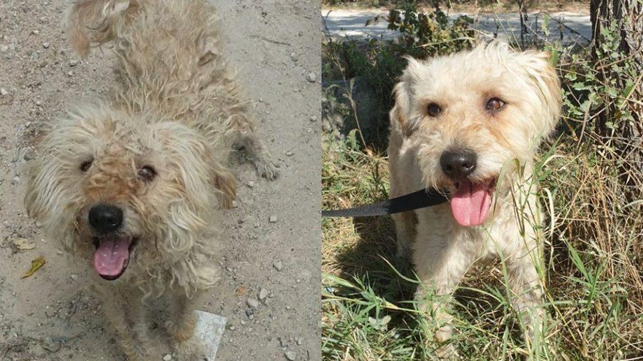 ( фото) До и После. Как меняются молдавские бездомные животные после того, как они обретают дом