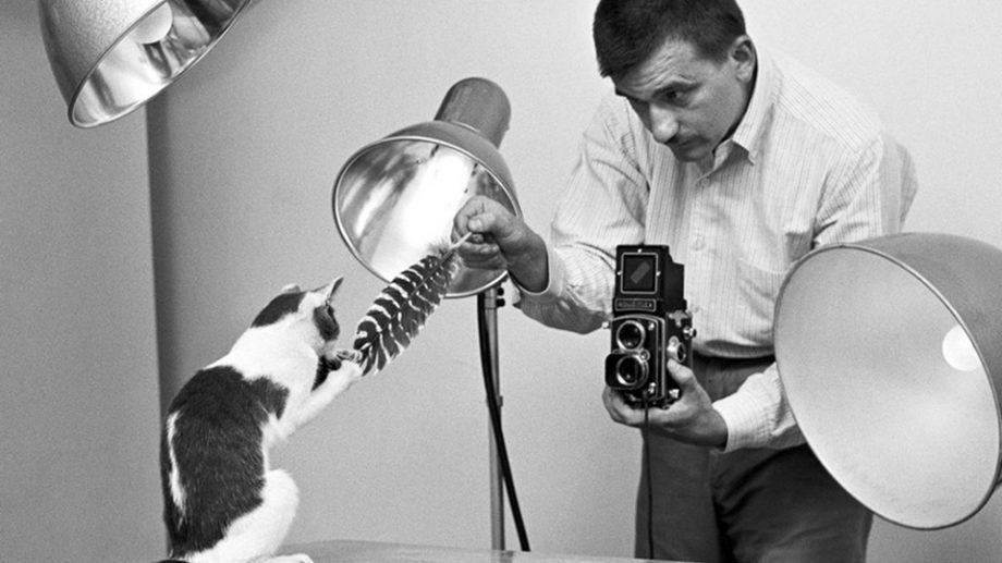 (фото) До «мимими» в соцсетях была плёнка и Уолтер Чандохи. Харизматичные снимки главного кошачьего портретиста XX века
