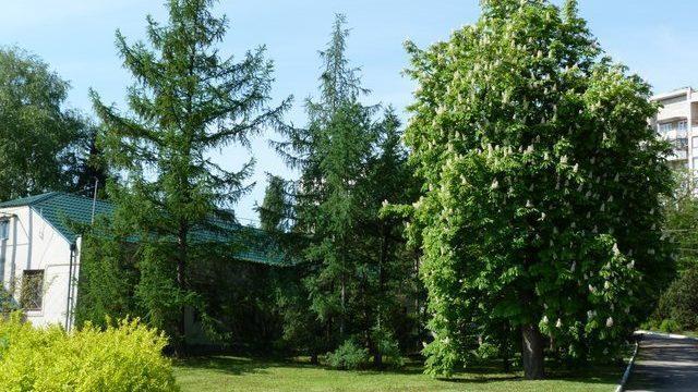 """В парке """"Дендрарий"""" появится новый вход для посетителей"""