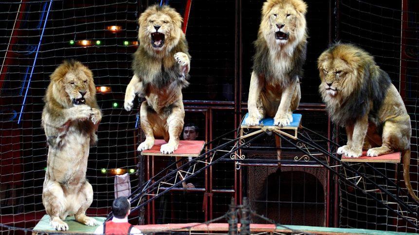 В России утвердили перечень случаев, при которых допускается использование животных в культурно-зрелищных целях