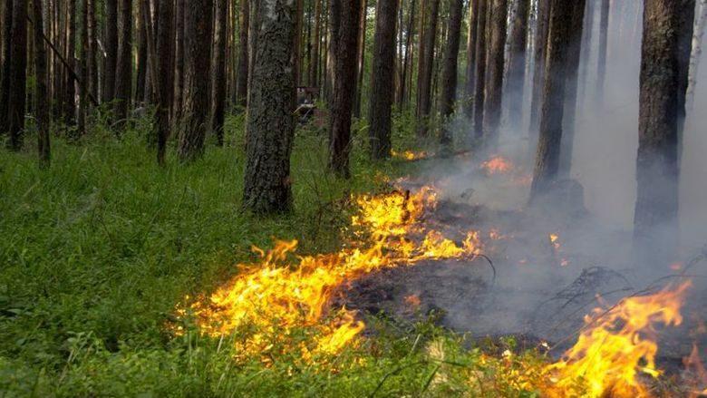 """""""Желтый код"""" в связи с чрезвычайной пожарной опасностью продлен до 18 сентября"""