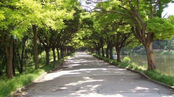 """В столичном парке """"Долина роз"""" начались работы по восстановлению одной из основных аллей"""
