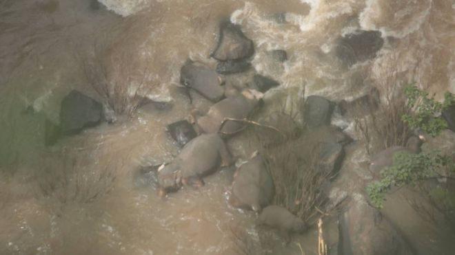 Шесть слонов погибли в Таиланде, пытаясь помочь друг другу на водопое