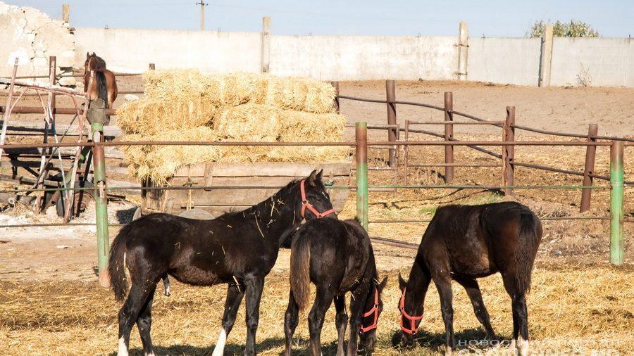 В Чадыр-Лунге могут открыть конный спортивно-оздоровительный комплекс