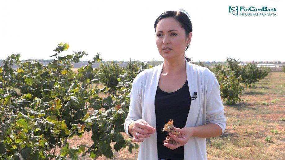 (видео) Сад экологических орехов — процветающий семейный бизнес. Светлана Ницоряну расскажет, в чем секрет успеха