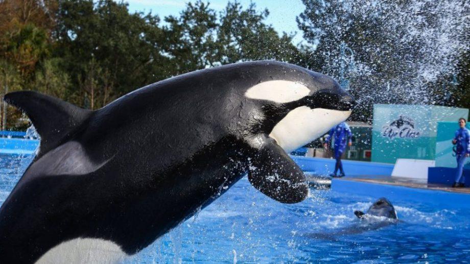 На TripAdvisor запретят продажу билетов в водные парки с китами и дельфинами