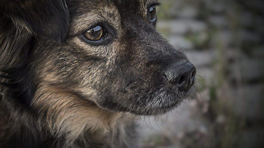 В Саратове бездомных животных убивали вместо помещения в приют, а деньги на их отлов расхищали