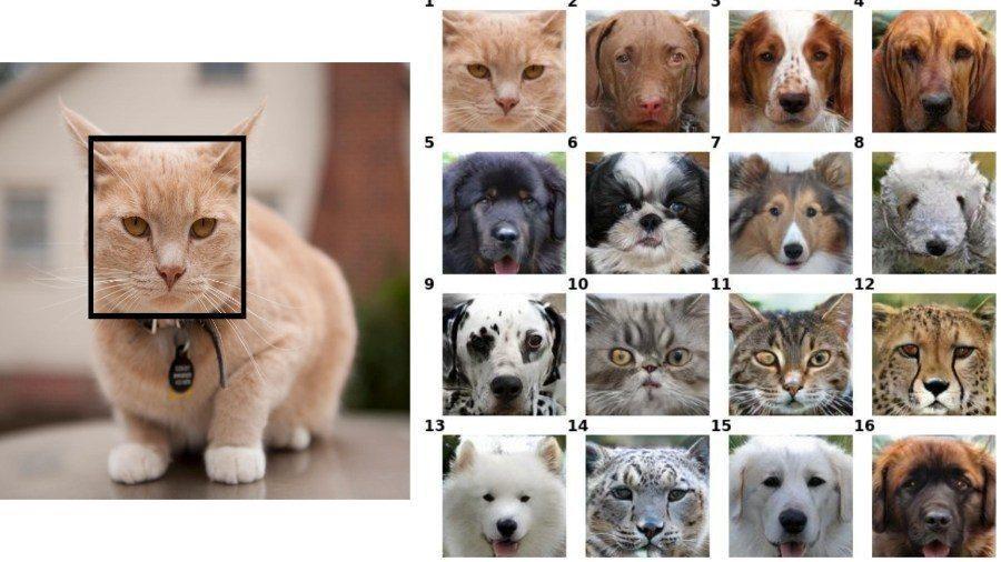 (видео) Котопёс. Звериные дипфейки — превратите вашу собаку в кота
