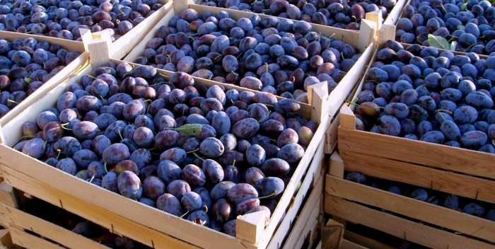 Власти Российской Федерации запретили ввоз 39 тонн слив и винограда из Республики Молдова