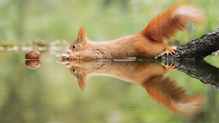 Готовы покинуть зону комфорта? Волонтерство заграницей в области защиты дикой природы