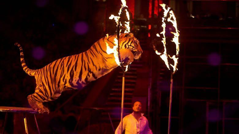 В Словакии запретили использовать диких животных в цирковых выступлениях