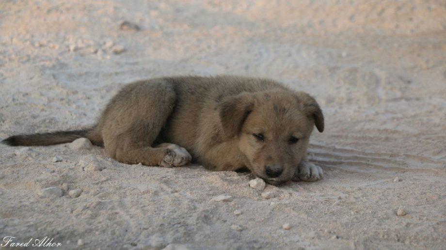Сирийский фотожурналист спас щенка, который потерял свою маму во время спецоперации по захвату лидера ИГ