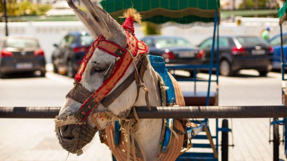 На испанском курорте власти запретили кататься на ослах упитанным туристам