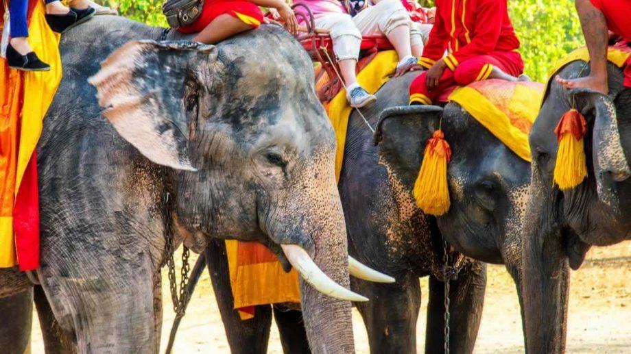 На Шри-Ланке от усталости умер слон, катавший туристов