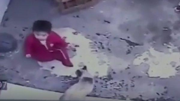 (видео) «Пушистый герой»: в сети появилось видео, на котором кот спасает ребенка от падения с лестницы
