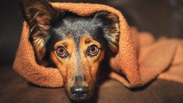 «Пожалуйста, соблюдайте тишину». Крики разрушают психику собак — не помогает даже угощение