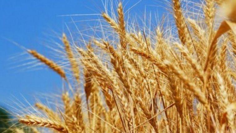 Еще 27 начинающих фермеров получат авансом 15 млн. леев в виде государственных субсидий