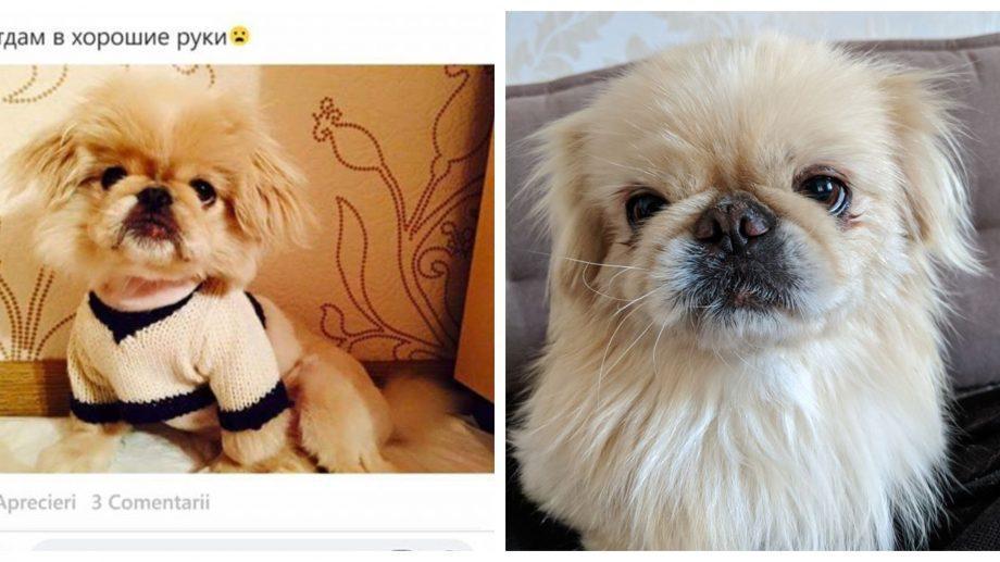 (фото) Узнал после трех лет разлуки. История о краже собачки из Кишинева со счастливым концом