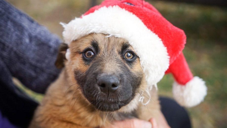 Driving home for Christmas. Во Франции сотни брошенных кошек и собак обрели новые семьи под Рождество