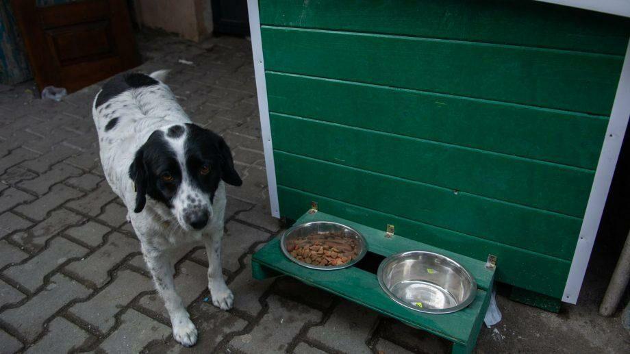(видео) Очень законопаслушная гражданка. Собака из Грузии, которая помогает детям переходить дорогу