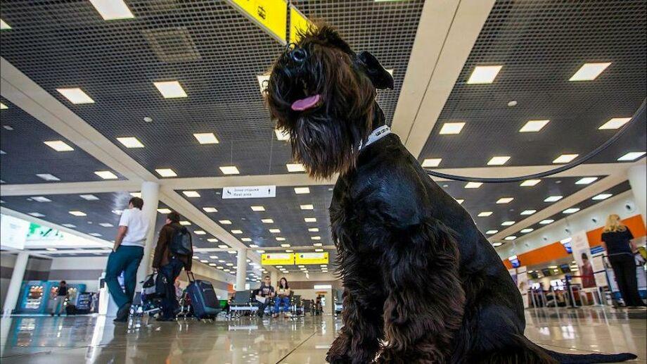 Пес по кличке Джек получила компенсацию за отмену рейса в размере 250 евро