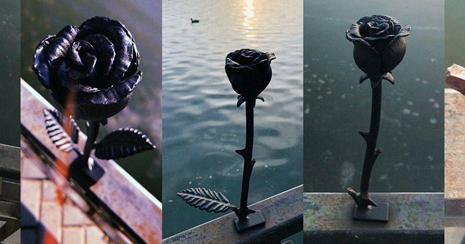 (фото) Роза «вернулась к берегам» Комсомольского озера