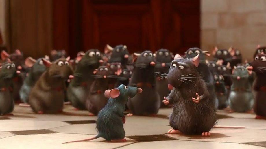 (фото) Драка мышей в подземке: названо лучшее фото дикой природы за 2019 год