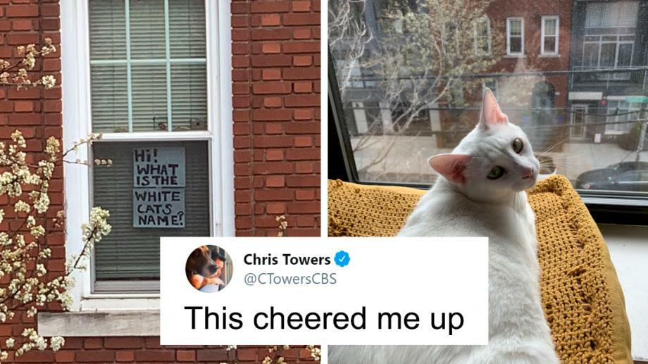 Кошки-Купидон. В Нью-Йорке на карантине жители соседних домов познакомились благодаря кошкам и твиттеру